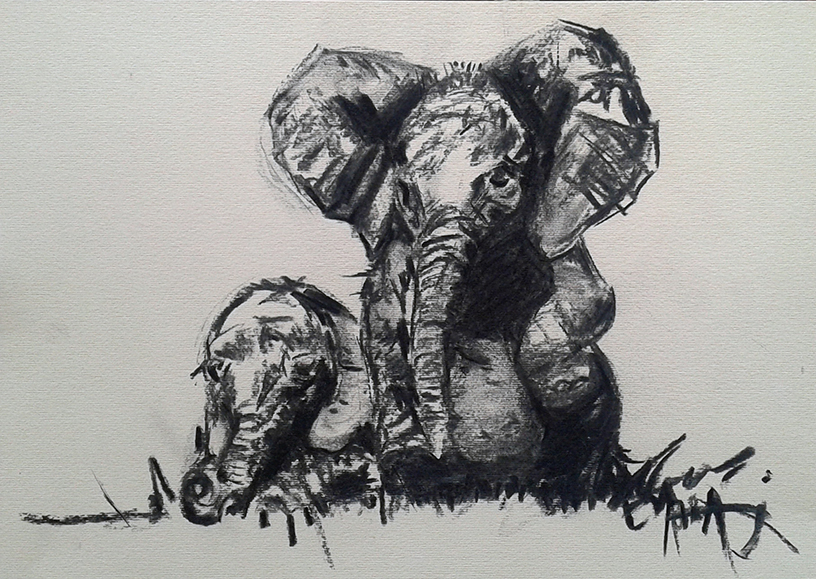 baby elephant charcoal illustration
